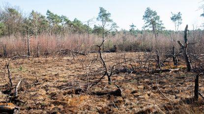 Vier jonge verdachten van brand op Kalmthoutse Heide gepakt