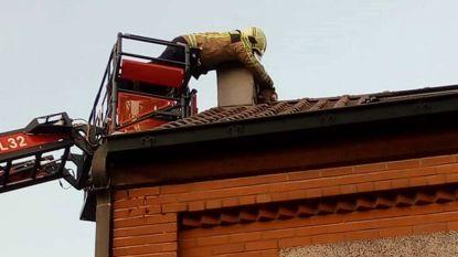 Brandweer redt 'roet'-kat uit schoorsteen