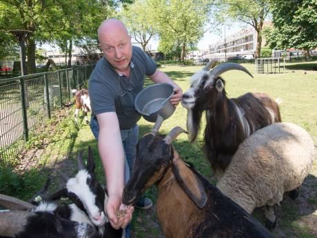 Kinderboerderij De Ramshorst in Zwolle overstelpt met reacties: tientallen mensen willen wel een dier hebben