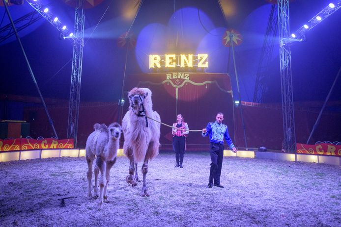 TT-2019-010669 EIBERGEN - Circus Renz Berlin doopt de pasgeboren baby-kameel in de piste tijdens de voorstelling.  Het beestje heet Kathie Camelia  EDITIE: ACHTERHOEK FOTO: Emiel Muijderman EVM20190509