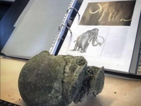 Bot van minstens 10.000 jaar oude wolharige mammoet gevonden in Hendrik-Ido-Ambacht
