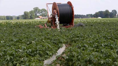Gouverneur versoepelt sproeiverbod voor West-Vlaamse landbouwers