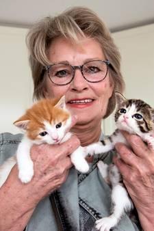 Opvallend veel jonge katjes op straat aangetroffen