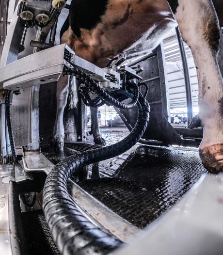 Melkrobot veroorzaakt dood tientallen koeien van boer uit Spijk