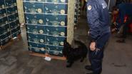 Geen lockdown voor drugsmaffia: kwart meer cocaïne in beslag genomen in de haven