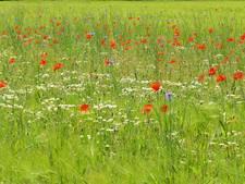Nog 4.500 euro van Het Groene Woud beschikbaar voor bloemen, bijen en insecten