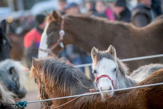 Paardenmarkt in Goor.