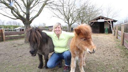 "Polly's Ranch krijgt wél erkenning als zorgboerderij, maar géén subsidies: ""Dus alle hulp is welkom"""