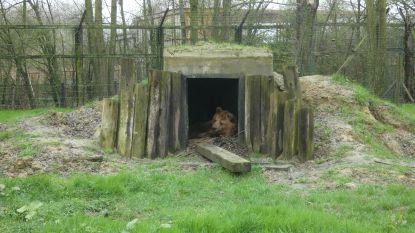 Beren Mimi en Berros ontwaken uit winterslaap, Uli slaapt nog even verder