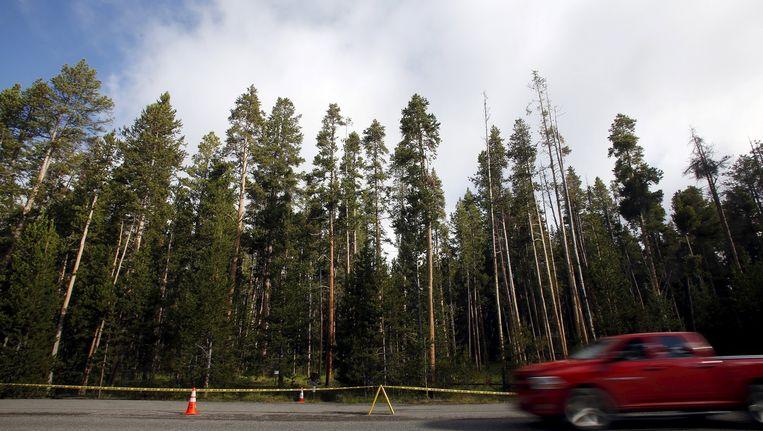 Een deel van het Amerikaanse Yellowstone Park werd tijdelijk afgesloten