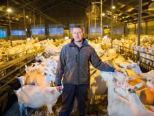 Raad van State aan zet in geitenaffaire Stolwijk: moet het mes in MooiMekkerland?