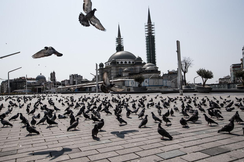 In het verlaten Istanboel hebben de dieren vrij spel.  Beeld Getty