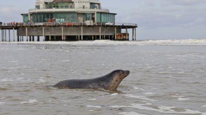 """""""Niet elk zeehondje moet gered worden"""""""