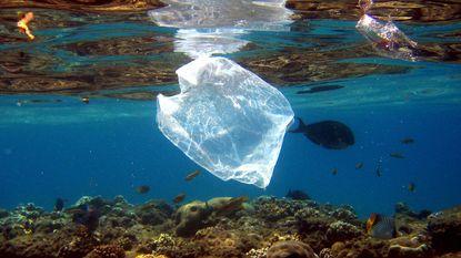 """""""Plasticvervuiling heeft nu werkelijk de verste uiteindes van de aarde bereikt"""""""