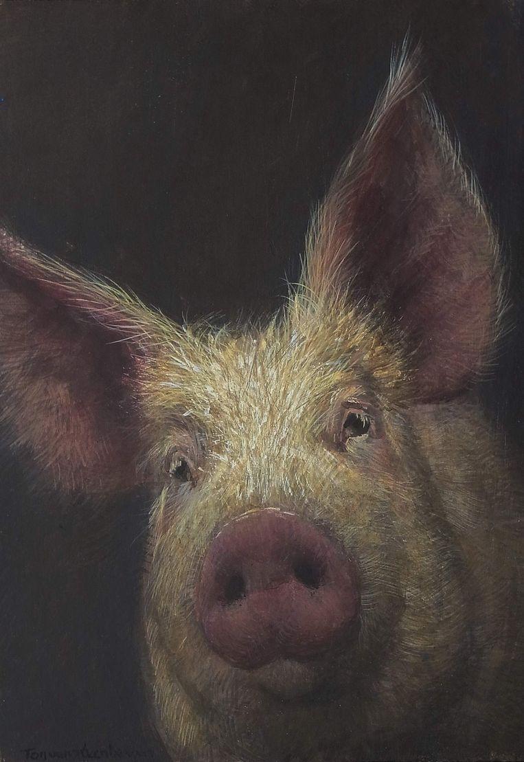 'Varken'. Schilderij  Ton van Steenbergen. Beeld x