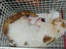 Agenten vinden zwaargewonde kat zonder voetjes in Vragender