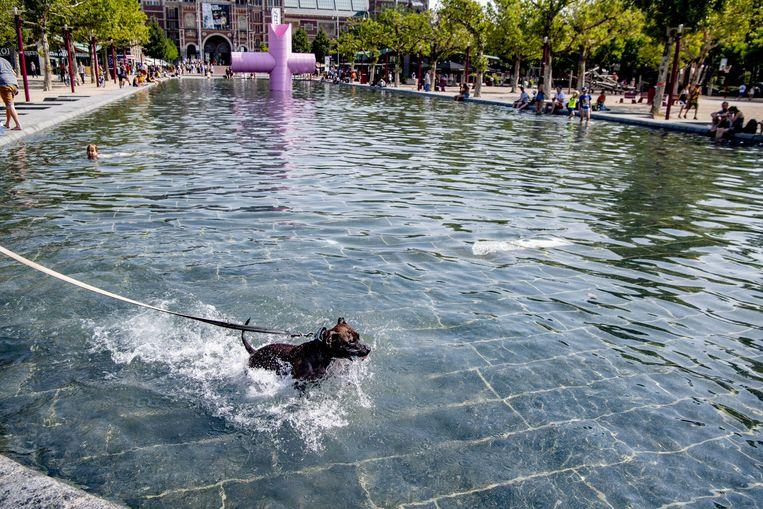 Een hond koelt af in het water op het Museumplein. Beeld ANP