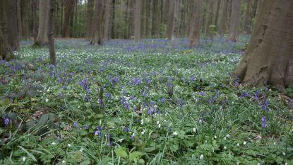 Schauvliege koopt 100 hectare bos in Vlaamse rand over van Brussel