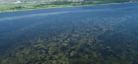 Maaien woekerplanten Randmeren onder druk na verontrustend rapport: waterkwaliteit valt zwaar tegen