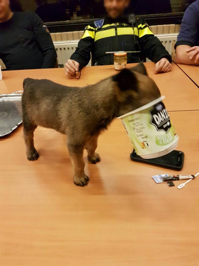 Puppy Bumper zit met zijn kopje vast in een beker yoghurt.