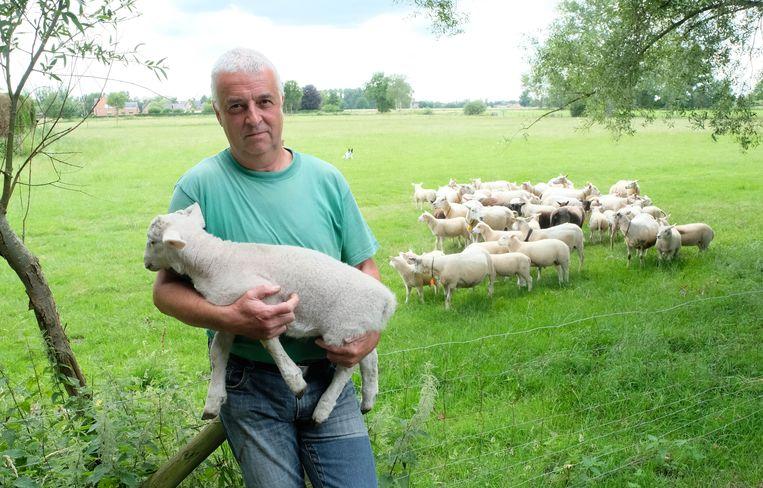 Jozef De Borger bij zijn schapen