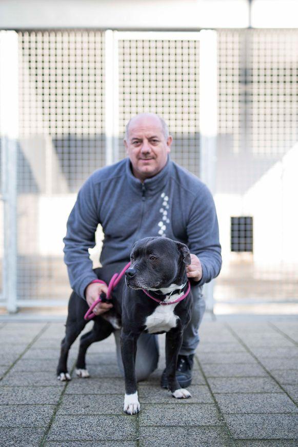 Dierenasiel te Sint-Truiden.  Philippe Zurinx met een Stafford hond.