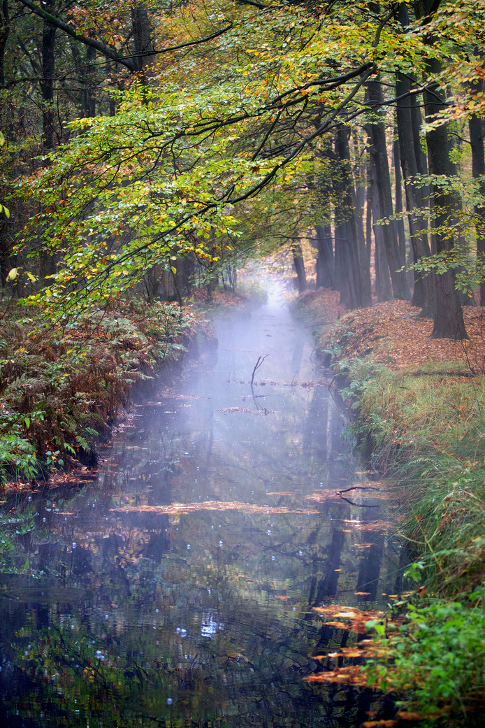 Boven de Sonse Heideloop staat regelmatig damp, omdat het lozingswater van de Rendac veel warmer is dan het natuurwater.