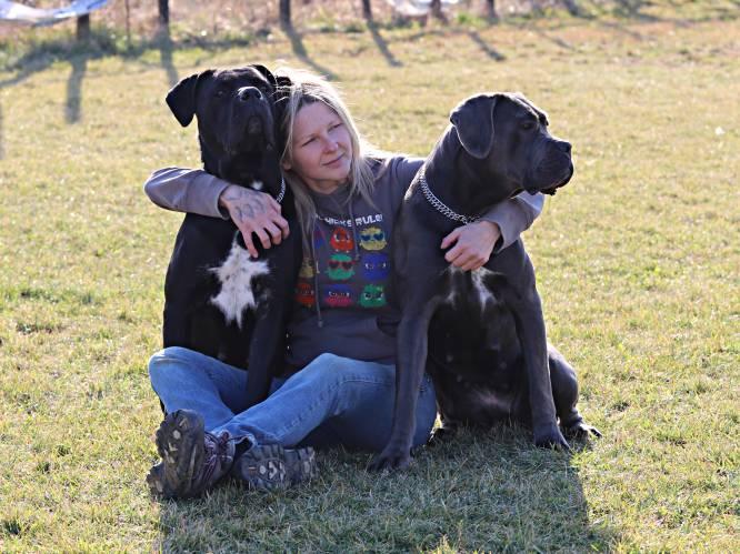 """Voorzitster Belgian Cane Corso Club reageert op dodelijk incident: """"Onverantwoord om een hond van dit ras met gedragsproblemen bij een bejaarde man af te zetten"""""""