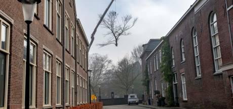 Een van de mooiste bomen van Tilburg gekapt: moest dat nou?