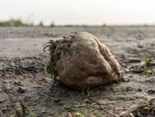 Hoe snel Kunnen Zeeuwse boeren gewasbeschermingsmiddelen terugdringen?