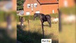 Commotie nadat jongeren paarden treiteren en bekogelen