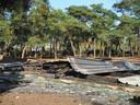 Tien dieren komen om bij aangestoken brand in Beekse Bergen.