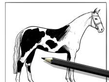 'Paardenvleesslager' uit Dodewaard in hoger beroep tegen celstraf voor fraude