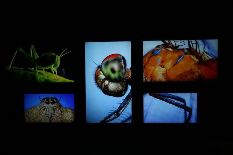 De inkom van het museum is vernieuwd met grote schermen om bewegende haarscherpe macrobeelden van insecten te kunnen tonen