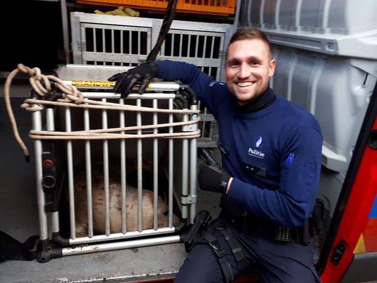 De brandweer en de politie konden de zeehond vangen en in een kooi stoppen.