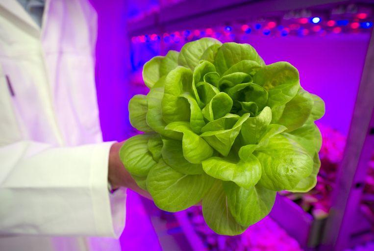 Het bedrijf Plantlab in Den Bosch. teelt duurzame groente, bloemen, planten en fruit. Beeld anp