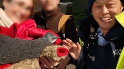 Avontuurlijk pinguïnpaar nestelt zich onder sushizaak in Wellington