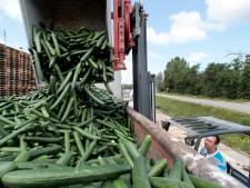 Handel in groente en fruit vreest sierteeltscenario: 'Er zijn bedreigingen zat'