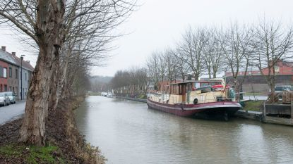 Groen start petitie tegen kappen van bomen aan de jachthaven in Oudenaarde