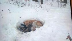 Mamahond en zes pups overleven als bij wonder in bittere kou en worden net op tijd gered
