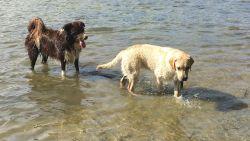 """Drie honden sterven na extreme vergiftiging: """"Honden bliezen hun laatste adem uit voor de ogen van onze kindjes"""""""