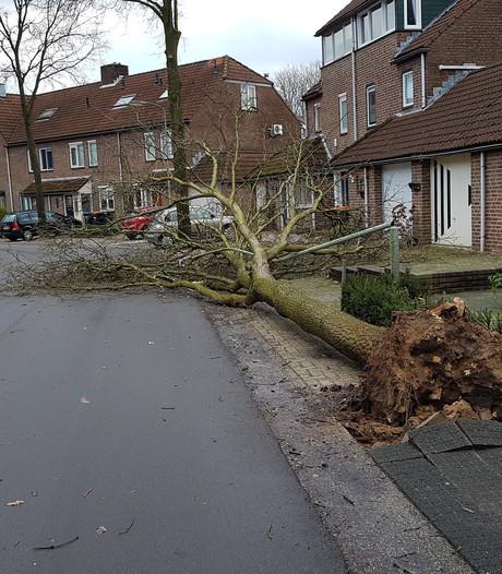 Na jaren klagen valt de boom in Beuningen