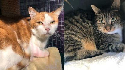 Katten teruggevonden in dichtgeplakte doos aan kant van de weg