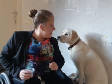 Senna dingt mee naar titel 'Mooiste Hond'