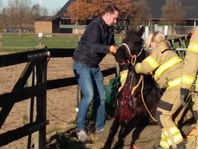 De pony raakte gewond en is door een dierenarts onderzocht.