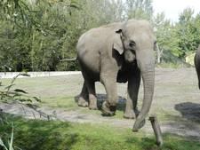 Olifant drachtig in Dierenrijk Nuenen