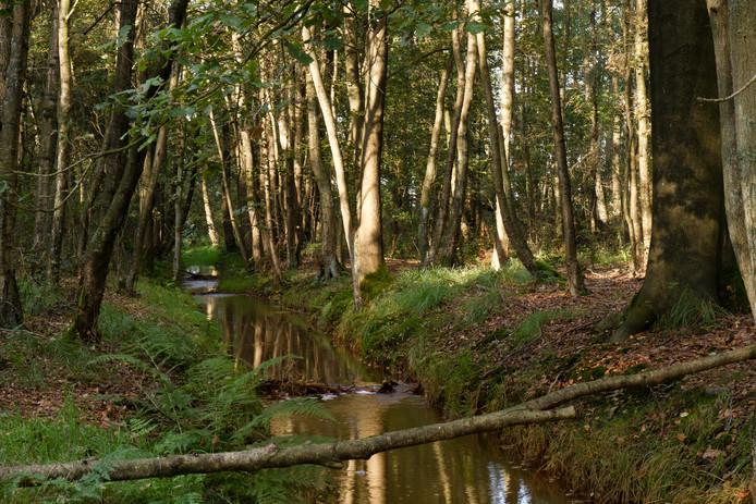De Run in zijn huidige vorm, zoals die door natuurgebied Grootgoor stroomt.