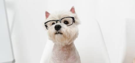 Hoe we meer ontspannen door het knuffelen van een (kantoor)hond