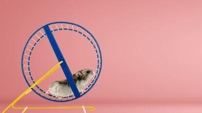 Los jij onze maandagpuzzel op? Wie heeft de hamster?