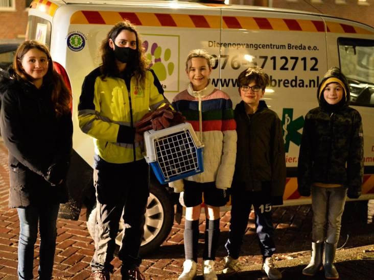 Kinderen verrichten goede daad in Breda en redden katje dat klem zit onder motorkap